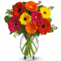 send gerberas flowers to cebu philippines, gerberas flowers delivery in cebu
