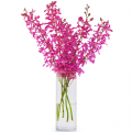 buy orchids flowers cebu philippines, orchids flowers delivery cebu
