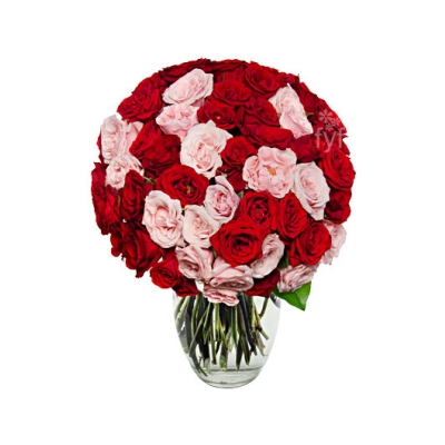 50 pink and red roses online to cebu