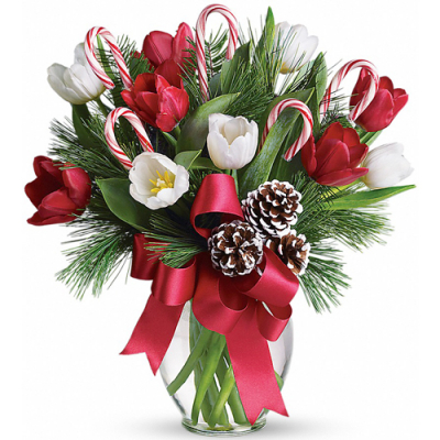 holiday red and white tulips in vase